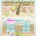 depilazione delle ascelle e struttura delle ascelle