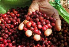 Silverskin: il nuovo ingrediente naturale anticellulite ricavato dal caffè